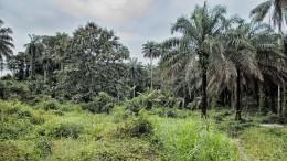Sierra Leone - unberührtes Land