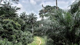 Sierra Leone, Wild Life
